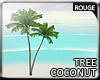 |2' Coconut tree I