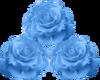 Blue Roses -1R
