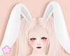 🌟 Bunny Ear Wt