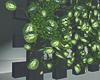 New Ivy Plants