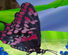 }T{Pink Butterfly
