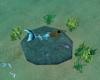 Swim, Float & Sit Plants