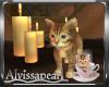 Cats N Coffee Kitten