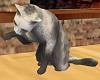 GRAY ANIMATED CAT