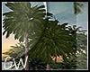 .:Hello Palm:.