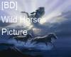 [BD] Wild Horses Picture