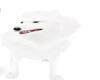 Samoyed_Pet