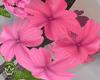 ♕ Bath Flowers