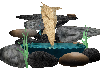 dalpin fountain