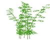 Plant Bambou