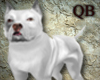[QB] Ages of dogs