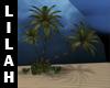 *L* Beach Palm