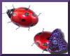 Ladybugs Sticker Animate