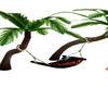 palmier/hammac ,love