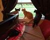 Cats in my window