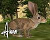 Jack Rabbit  - static