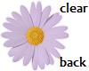 TF* Purple Daisy