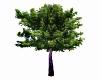 Huntersmoon Tree