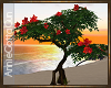 Red Hibiscus Tree