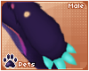 [Pets] Ame   paws M