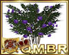QMBR Flowering Bush P