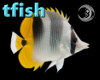 [tfish] Tropical Fish