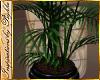I~Paris Palm Plant