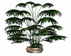 Potted Plants Plant