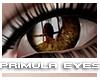 [V4NY] Primula Eyes 06
