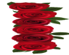 Long Right Red Roses