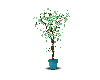 fluf plant