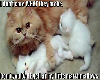mommy and baby kittys