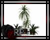 THE RITZ Plant