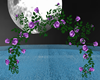 Arch purple roses