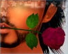 Lovers Rose