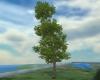 Animated tree #1