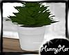 Summerset Shelf Plant V3