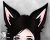 Y' Black Fox Ears