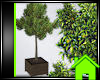 ! POTTED TREE