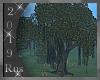 Rus: Old Oak Tree
