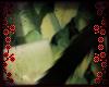 🐾 Onyx Kit Tail V1