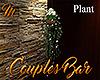 [M] Couples Bar Plant