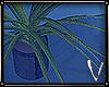CATE PLANT II ᵛᵃ