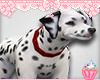Dalmation Cruella
