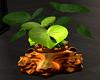 Lion Planter Bronze