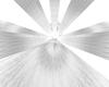 White  Spin Light