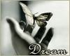 Dream butterfly