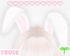 T° Bunny Ears