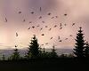 Animated Flying Birds