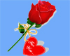 ~rose for you ~